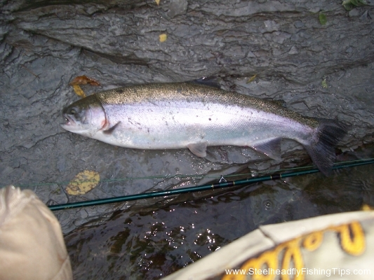 steelheadflyfishingtips.com_steelhead12