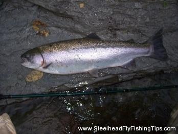 steelheadflyfishingtips.com_steelhead11