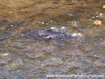 steelheadflyfishingtips.com_trout_run17