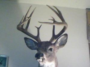 Michelle Weber 12 Point Buck