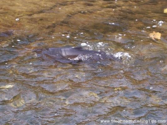 steelheadflyfishingtips.com_trout_run17