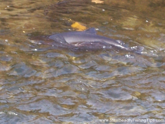 steelheadflyfishingtips.com_trout_run14
