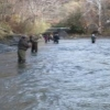 steelheadflyfishingtips.com_steelhead_walnut creek6